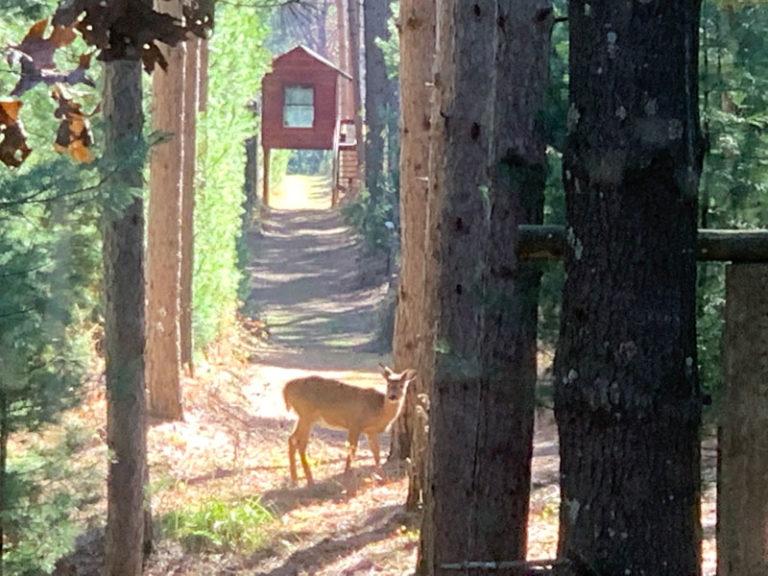 Deer on the resort.