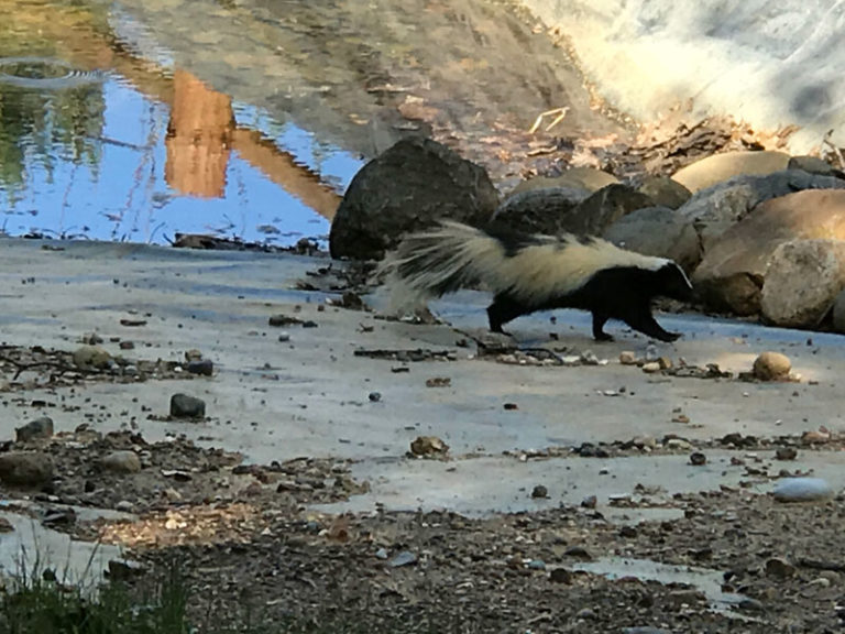 Wildlife at the resort.